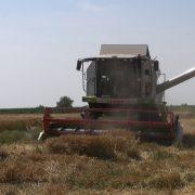 Veliki Radinci: Niska cena pšenice gora od elementarne nepogode