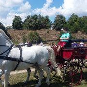 Održana treća Fijakerijada u Inđiji:nadmetanje konjskih zaprega