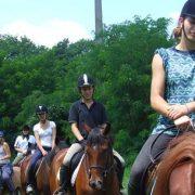 Sremska Mitrovica: Škola jahanja za sve ljubitelje konja