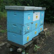 Pčelarstvo: Loša godina za med
