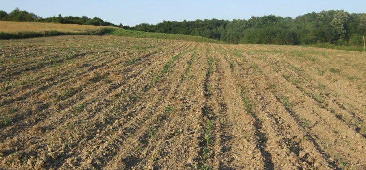 Ruma: Oglas za javnu licitaciju za davanje u zakup poljoprivrednog zemljišta