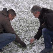Ruma: Poljoprivrednici bez bojazni za svoje useve usled niskih temperatura