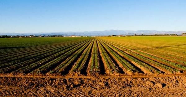 Pećinci: Na javnoj licitaciji za poljoprivredno zemljište najviša postignuta cena je 27.900 dinara po hektaru