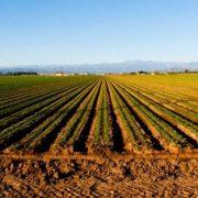 Ruma: Javni poziv aktivnim poljoprivrednim gazdinstvima za subvencionisanje osiguranja useva, plodova, višegodišnjih zasada, rasadnika i životinja