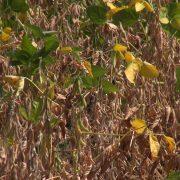 Poljoprivreda: usevi katastrofa