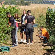 Irig: Učenici berbom grožđa u školskom vinogradu svečano započeli novu školsku godinu
