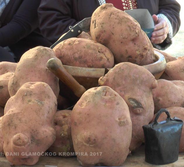 TV Fruška gora: Reportaža Dani glamočkog krompira (VIDEO)