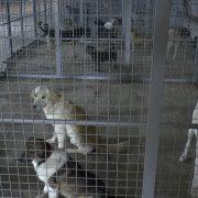 Svetski mediji pozitivno pišu o mitrovačkom Prihvatilištu za pse