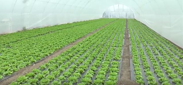 Obuka za elektronsko prijavljivanje radnika u poljoprivredi