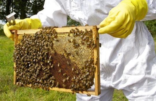 Bespovratna sredstva za vojvođanske pčelare