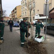 Prolećno uređenje Sremske Mitrovice