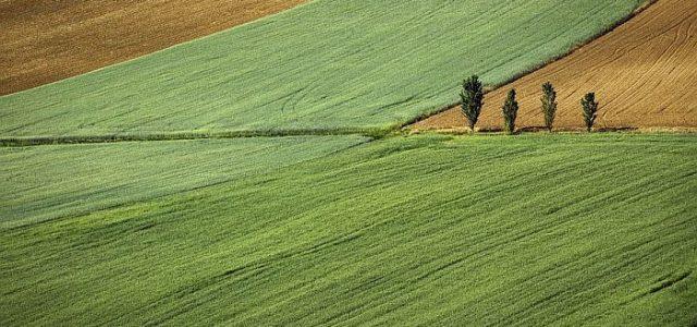 """Licitacija za državno poljoprivredno zemljište ove godine """"Online"""""""