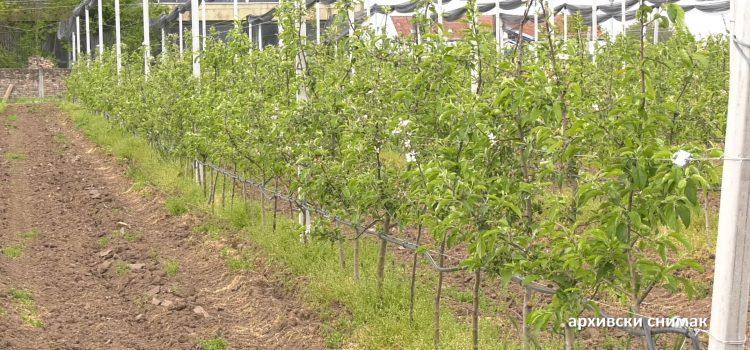 Komlikovana zaštita voćnjaka i vinograda zbog padavina