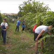 Jačanje vinskog turizma na Fruškoj gori