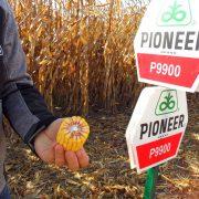 """Tradicionalno obeležen Dan polja – """"Pioneer"""" hibridi u samom vrhu prema  kvalitetu i prinosu"""