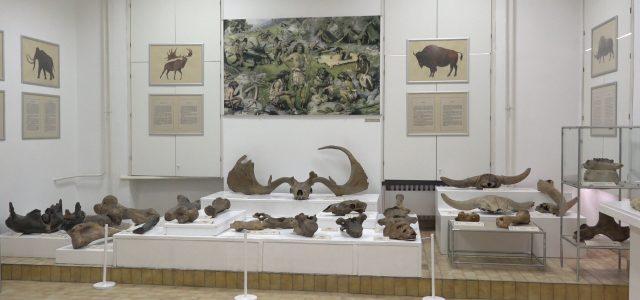 Prirodnjačka postavka u Muzeju Srema (VIDEO)