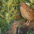 Vlada Srbije naložila preduzimanje mera za iskorenjivanje stradanja divljih ptica