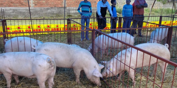 16. Sajam svinja i poljoprivrede sledećeg vikenda u Kuzminu