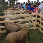 """Ležimir, održani """"Ovčarski dani"""": Ratari će poći za ovcama"""