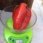 Ravnje: Loša godina za proizvođače paprike