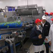 Dobrinci: Ulaganje u povrtarstvo važno za srpsku poljoprivredu
