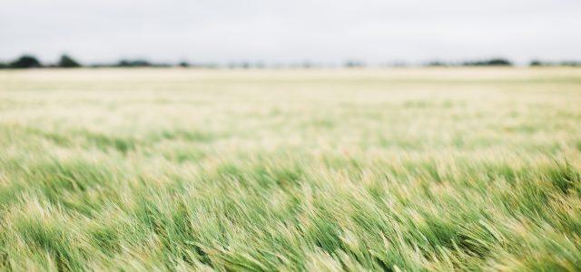 Sremska Mitrovica: Obaveštenje za poljoprivrednike