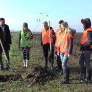 Posađeno 350 sadnica hrasta uz put Beška-Krčedin
