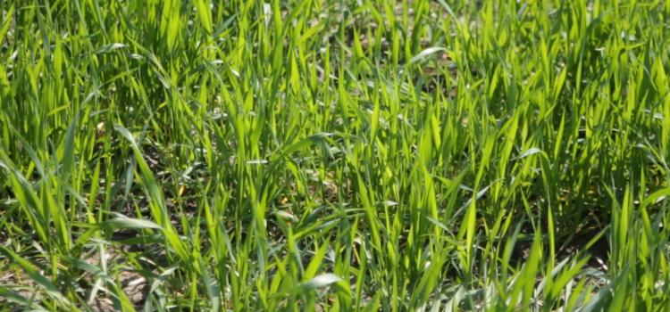 Analizom zemljišta i adekvatnom prihranom do visokih prinosa