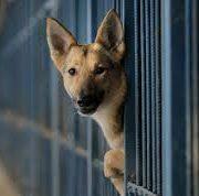 Počelo sa radom Prihvatilište za pse lutalice u Staroj Pazovi