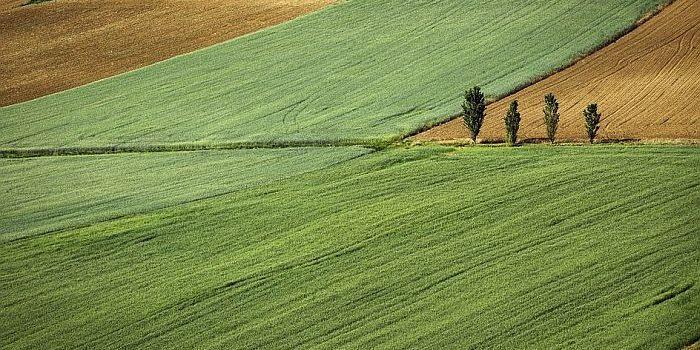 U Inđiji sve veći budžet za poljoprivredu (VIDEO)