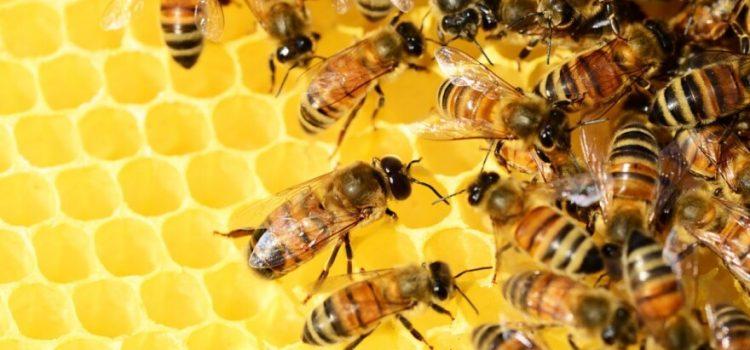 Otvoren konkurs za sufinansiranje investicija u pčelarstvo