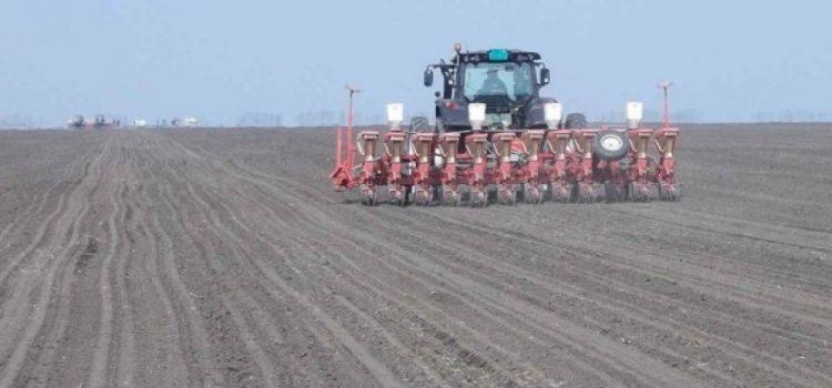 I ove godine u Sremu, najznačajnije površine pod kukuruzom