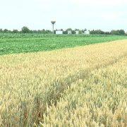 Inđijski poljoprivrednici zainteresovani za sredstva podrške za razvoj poljoprivrede