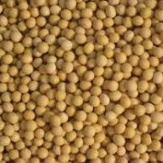 Soja je i dalje jedna od vodećih kultura u Sremu