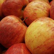 Otpočela berba jabuka u Sremu