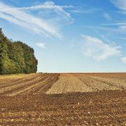 U iriškoj opštini najavljena prva onlajn licitacija za davanje u zakup poljoprivrednog zemljišta