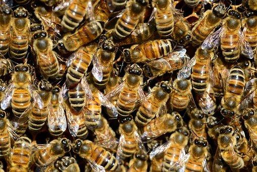 Pčelari se nadaju hladnoj zimi, bez temperaturnih oscilacija
