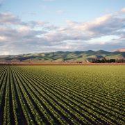 Pokrajinski konkursi za poljoprivrednike