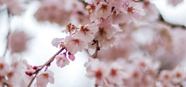 Sutra počinje proleće